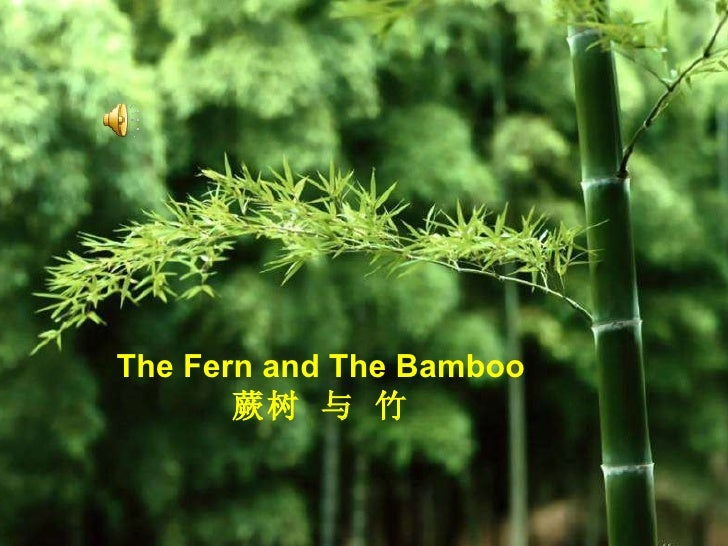 The Fern and The Bamboo  蕨树 与 竹