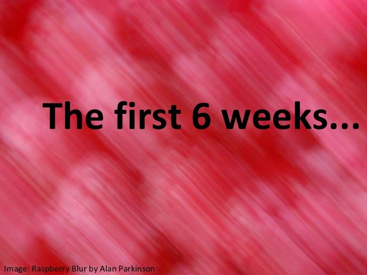 The first 6 weeks... Image: Raspberry Blur by Alan Parkinson
