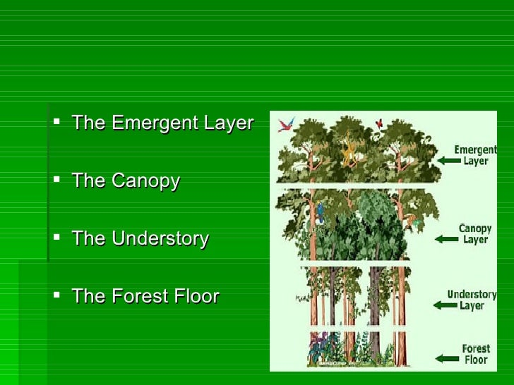 10 Facts About The Forest Floor