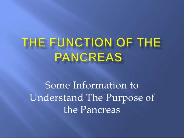 Pancreas Function And Location The Function of The Pancreas
