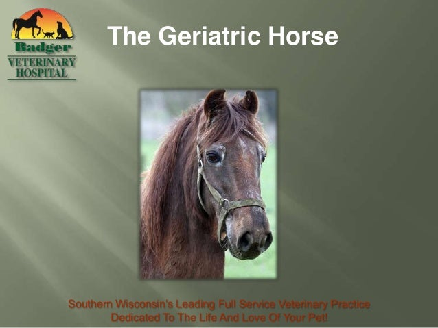 The Geriatric HorseSouthern Wisconsin's Leading Full Service Veterinary Practice        Dedicated To The Life And Love Of ...