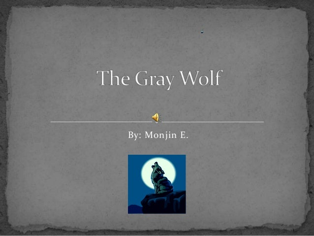The gray wolf new version