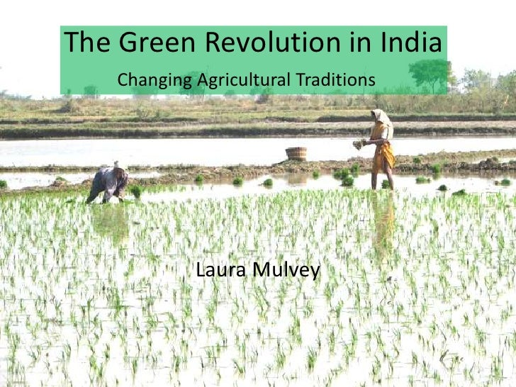 case study on green revolution in punjab The best opinions, comments and analysis from the telegraph.