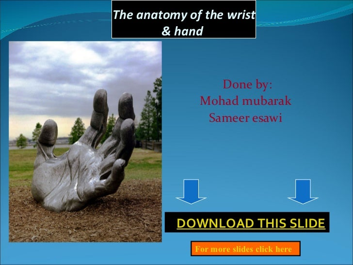 The anatomy of the wrist & hand  Done by: Mohad mubarak  Sameer esawi      DOWNLOAD THIS SLIDE For more slides click here