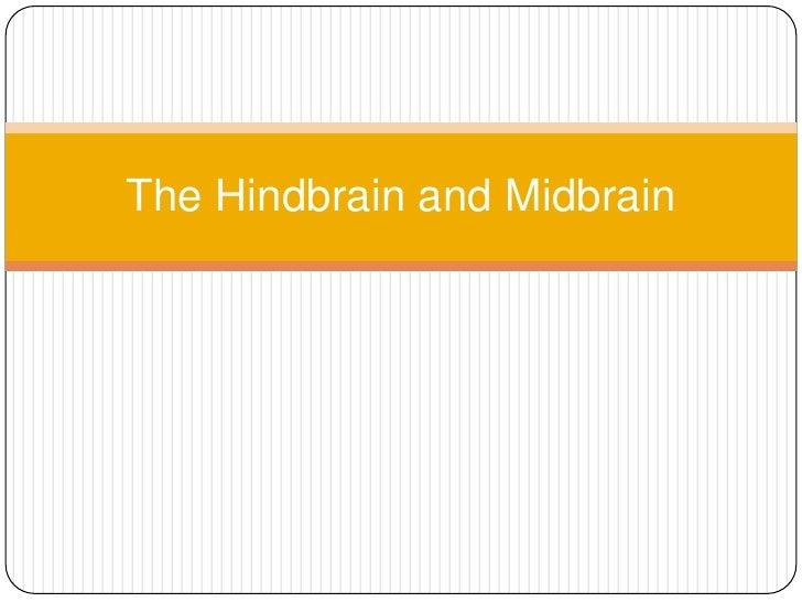 The Hindbrain and Midbrain