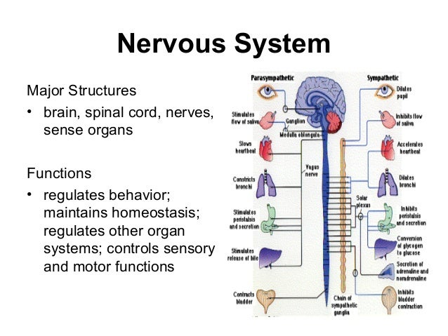 Human body organ systems and their functions