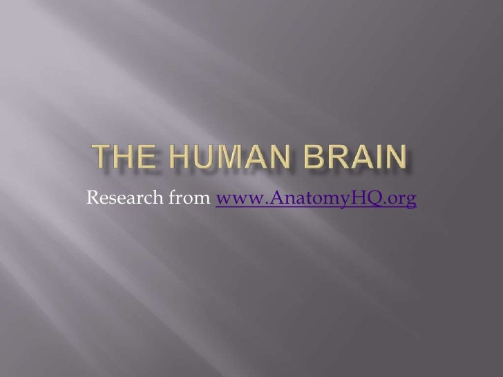 The Human Brain<br />Research from www.AnatomyHQ.org<br />