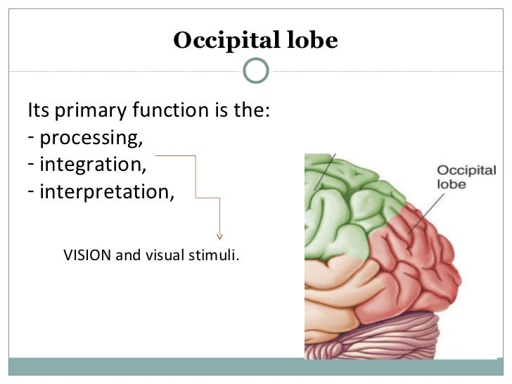 an analysis of the language processing and comprehension of the facial neurons Free practice questions for ap biology - understanding afferent and efferent neurons includes full solutions and score reporting.