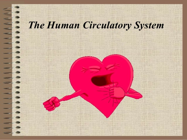 The human circulatory system2