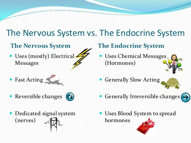 The nervous and endocrine system Essay