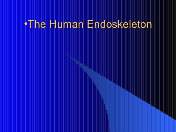 The human endoskeleton