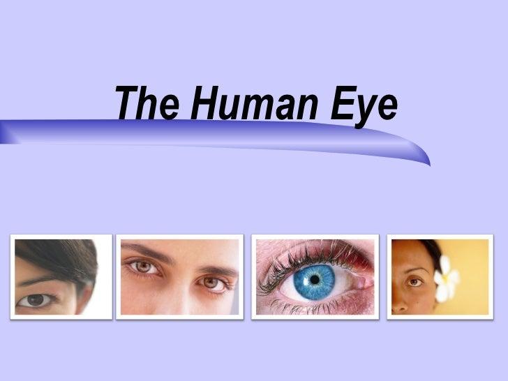 The human eye 10 13-2011