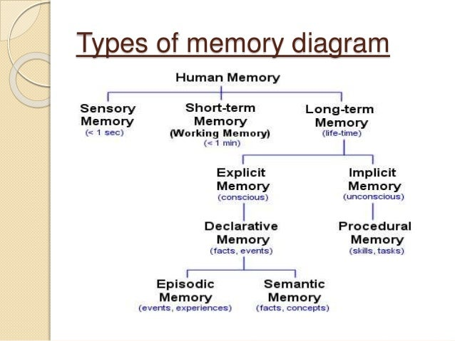 human being memory What is the difference between the memory of human being and the memory of an animal , there are various types of memories we humans have such as long term memory.