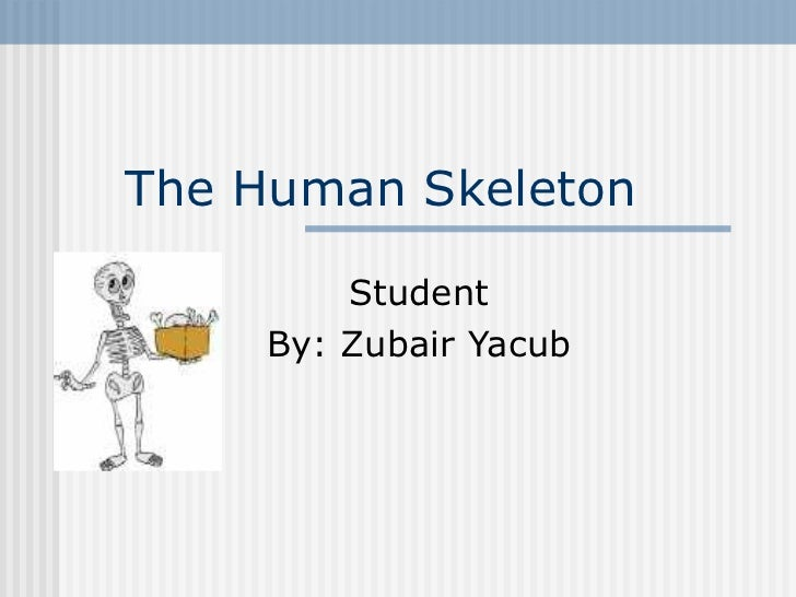 The Human Skeleton Student By: Zubair Yacub