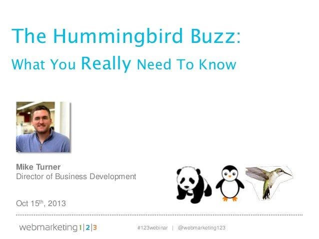 The Hummingbird Buzz: What You Really Need to Know