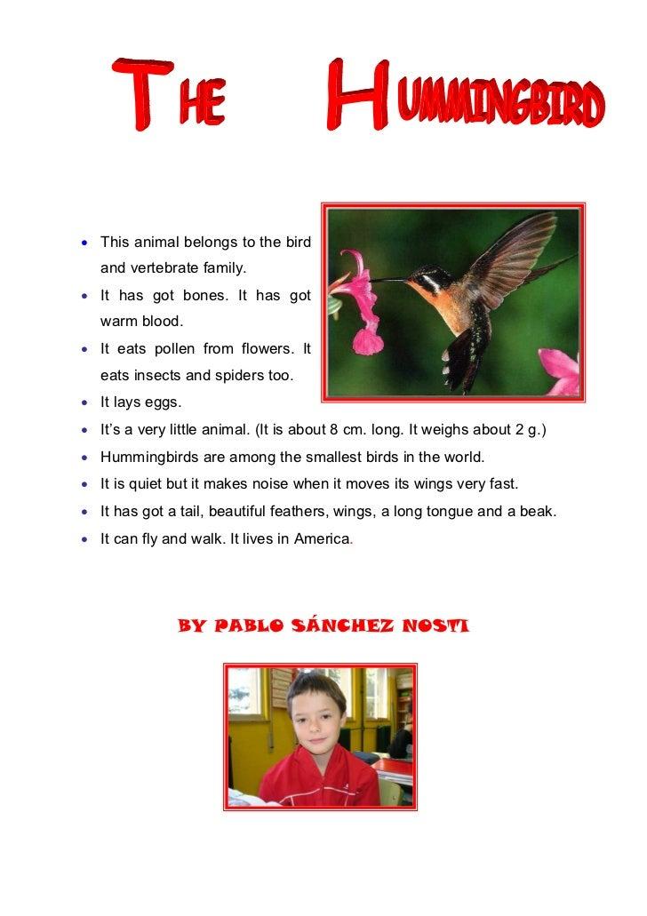 • This animal belongs to the bird   and vertebrate family.• It has got bones. It has got   warm blood.• It eats pollen fro...
