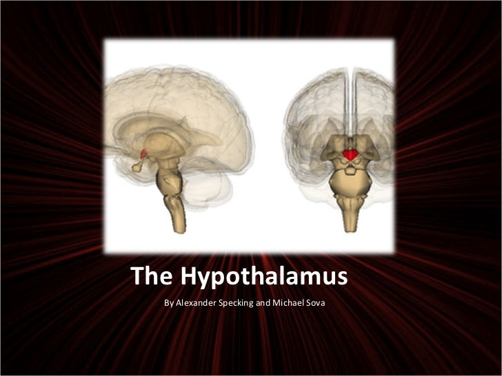 The Hypothalamus <ul><li>By Alexander Specking and Michael Sova </li></ul>