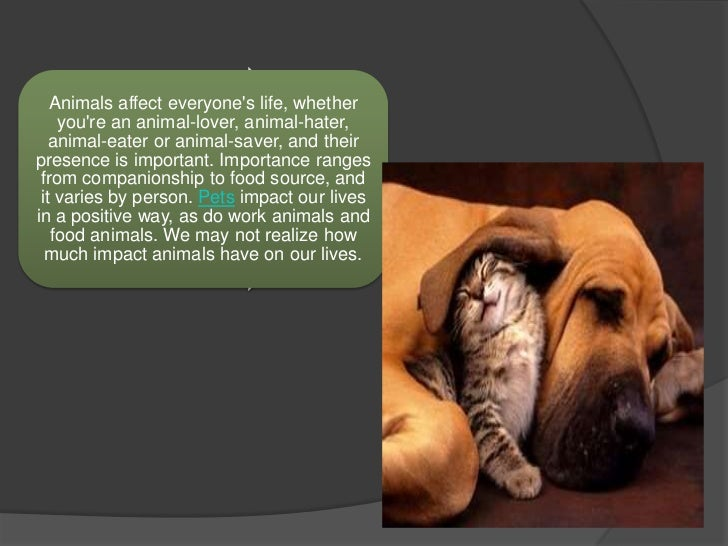 animals as pets essay