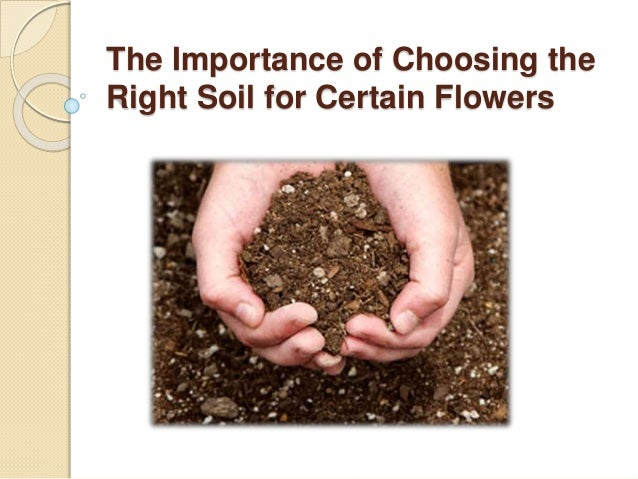 The importance of choosing the right soil for certain flowers for Soil 1 year mba