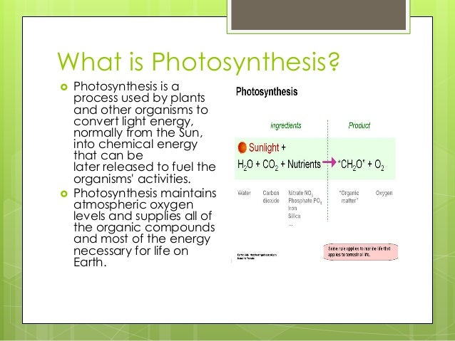 understanding the process of plant photosynthesis How the products of the light reactions, atp and nadph, are used to fix carbon into sugars in the second stage of photosynthesis.