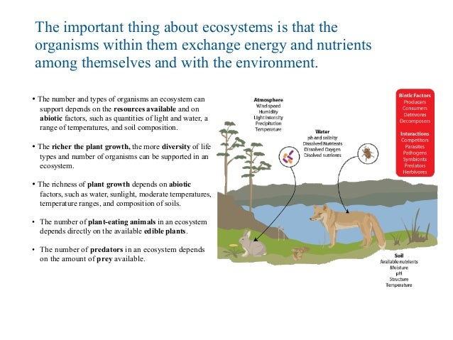 the organisms in every ecosystem can Food chains and webs of resource availability on organisms and populations of organisms in an ecosystem eaters) eat other animals and can be small.