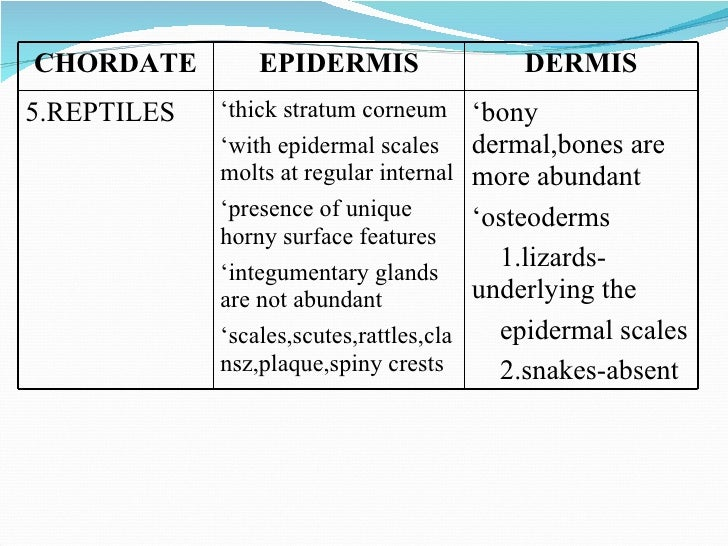 compare and contrast oligochaetes and caecilians General characteristics of vertebrates  frogs, toads, salamanders, and caecilians reptilia - turtles, snakes, lizards,  in contrast, the best fossil .
