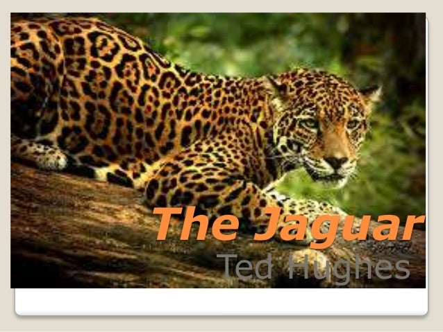 ted hughes the jaguar The jaguar poetry analysis  the poem ð²ð'the jaguarð²ð'™ written by ted hughes describes the lifestyles of animals at a zoo and their different .
