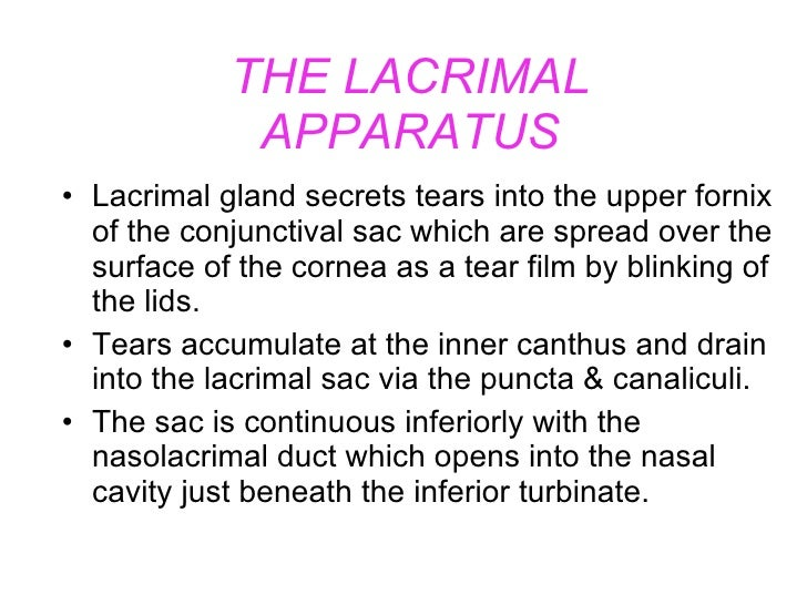THE LACRIMAL APPARATUS <ul><li>Lacrimal gland secrets tears into the upper fornix of the conjunctival sac which are spread...
