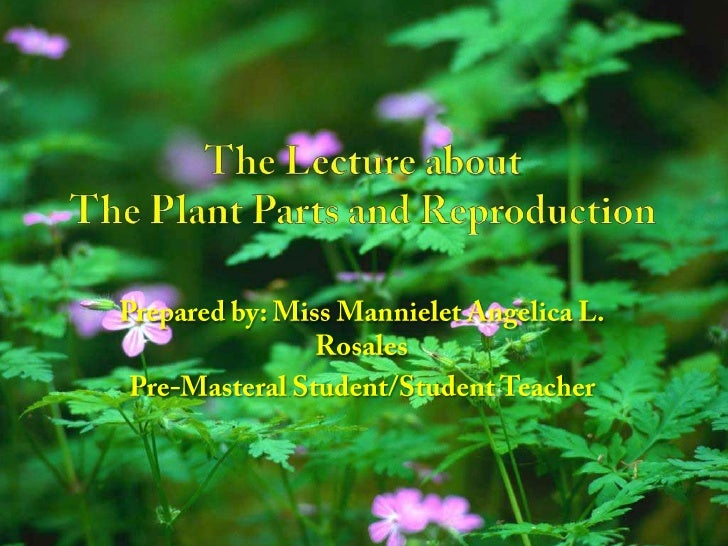 The Lecture aboutThe Plant Parts and Reproduction<br />Prepared by: Miss Mannielet Angelica L. Rosales<br />Pre-Masteral S...