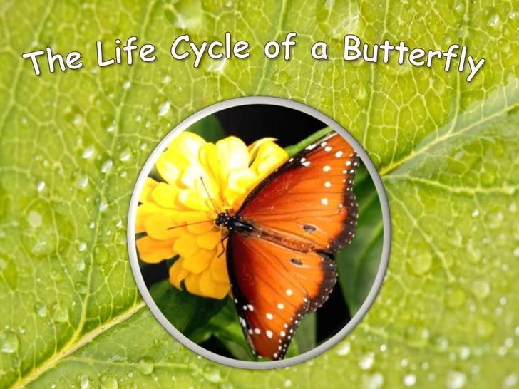 The Life Cycle of a Butterfly<br />