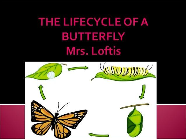The lifecycle of a butterfly final [autosaved]