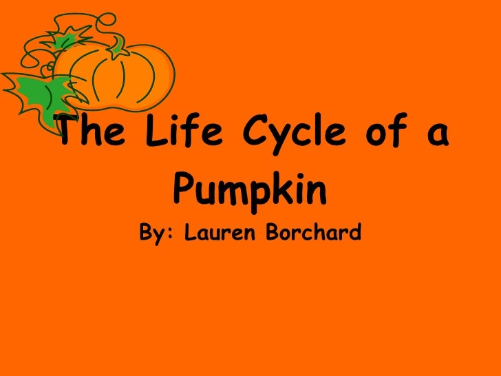 The Life Cycle of a Pumpkin By: Lauren Borchard