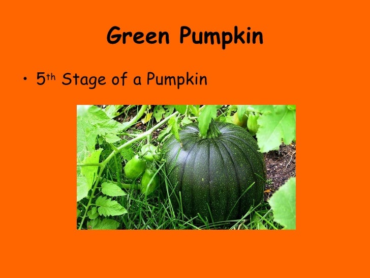 pumpkin cooking seeds