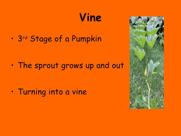The Life Cycle Of A Pumpkin on Plant Life Cycle Stages