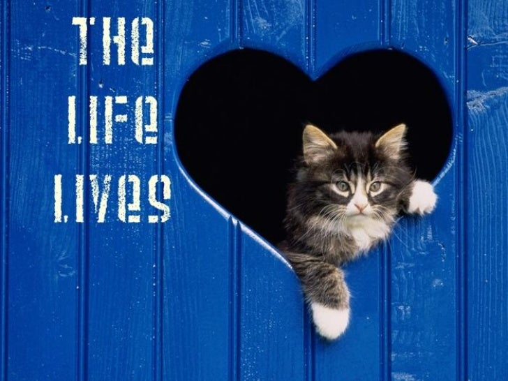 The Life Lives