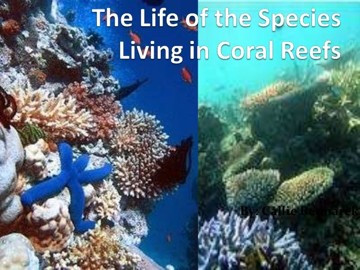 The life of the species living in coral