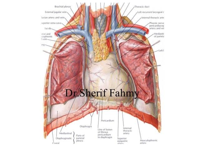 anatomy of thorax mcqs Mcqs anatomy the abdomen and pelvis anatomy the abdomen and pelvis plab, ielts, usmle, gre, aipgmee, aiims, afmc, bhu, cmc, jipmer, pgi, sgpgi.