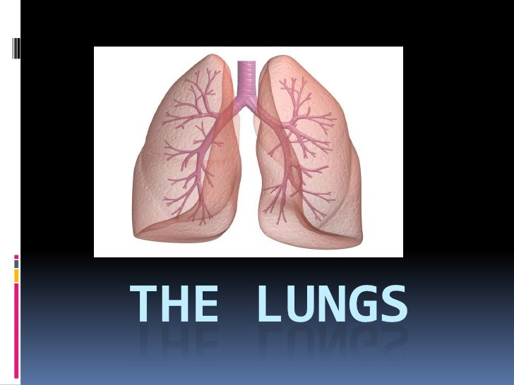 The lungs presentation