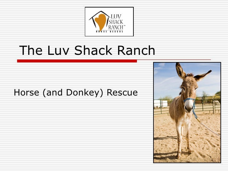 The Luv Shack Ranch Horse (and Donkey) Rescue