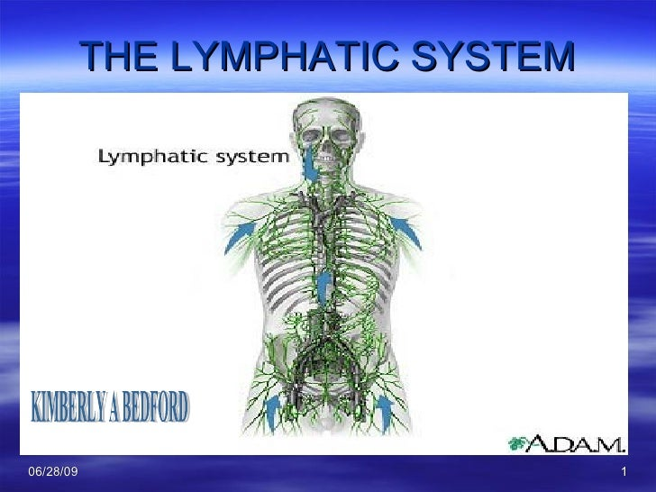 THE LYMPHATIC SYSTEM KIMBERLY A BEDFORD