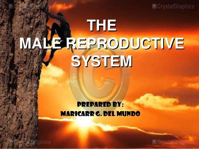THEMALE REPRODUCTIVE     SYSTEM        Prepared by:    MARICARR G. DEL MUNDO