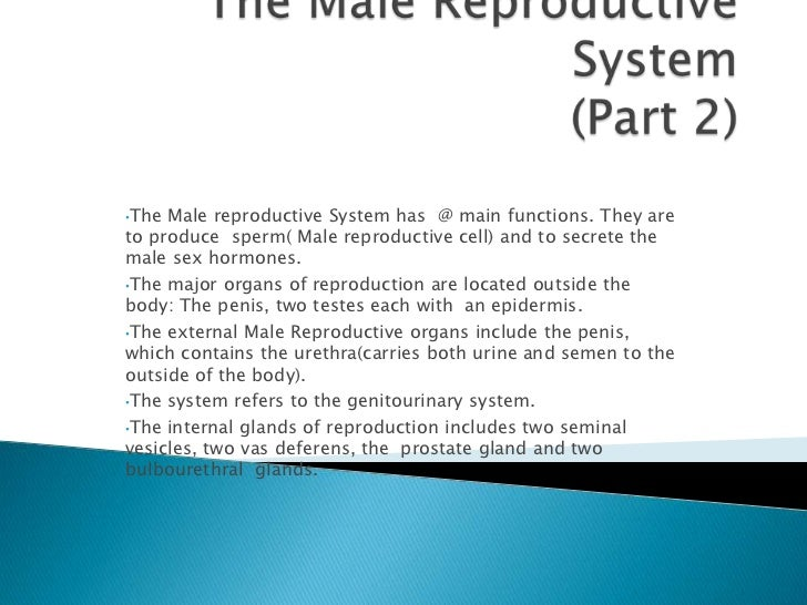 •The Male reproductive System has @ main functions. They areto produce sperm( Male reproductive cell) and to secrete thema...