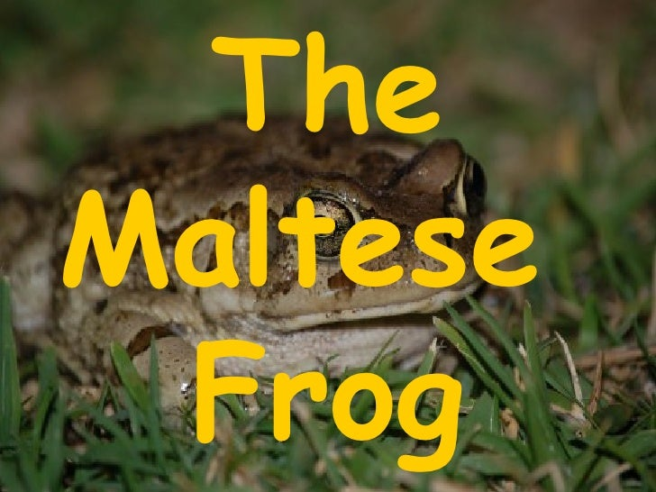 The Maltese  Frog