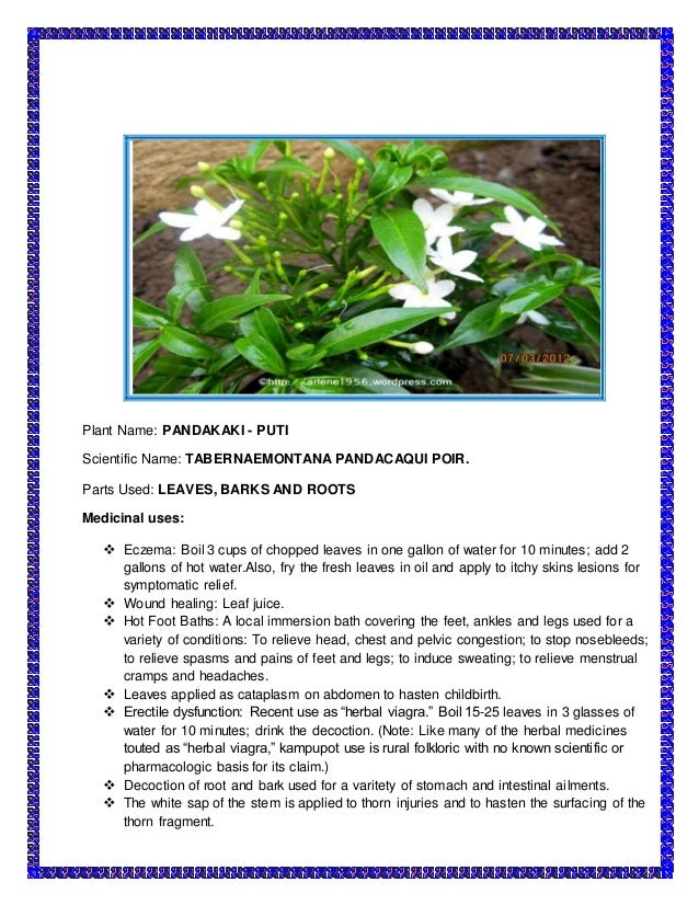 tabernaemontana pandacaqui poir pandakaki puti ointment on Full text of forestry books see other formats .