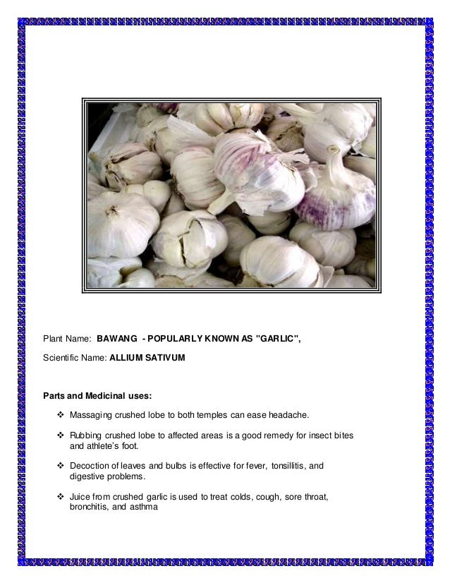 a research on medicinal plants garlic Keywords: italian garlic carbohydrates fructans dietary fibre soluble  it has  been used as a medicinal plant since ancient times, and it is still being  this  research provides evidence for the importance of studying the.