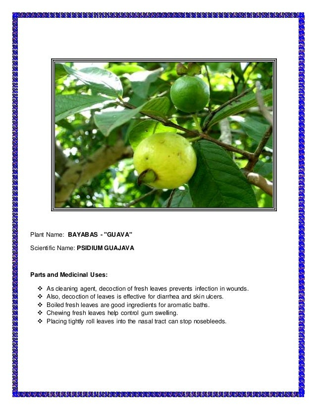 guava leaves extract as main ingredient This review describes the active component of the aqueous guava leaf extract  and its inhibition of alpha-glucosidase enzymes in vitro, safety of the extract and.