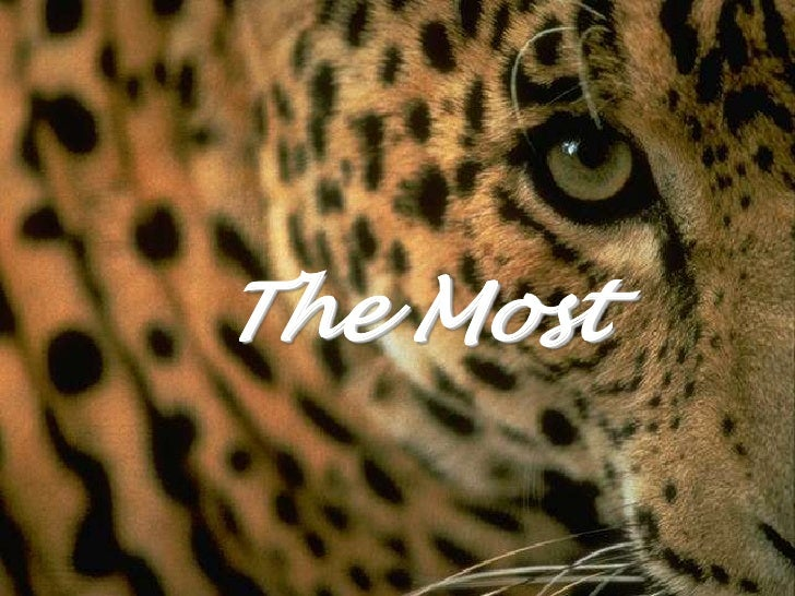 The Most<br />