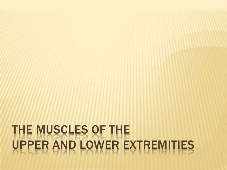 The Muscles of the Upper and Lower Extremities<br />