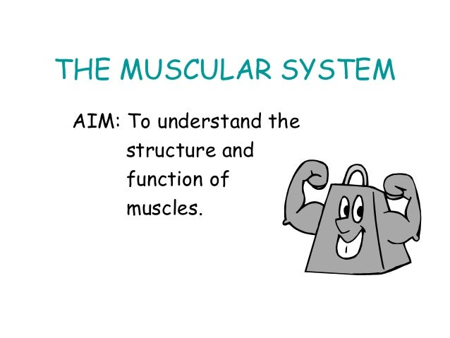 THE MUSCULAR SYSTEMAIM: To understand thestructure andfunction ofmuscles.