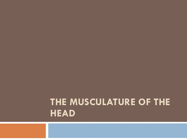 THE MUSCULATURE OF THE HEAD